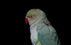 Đến Afghanistan khám phá chợ chim