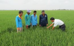 Nhiều mô hình tốt nâng cao cuộc sống cho nông dân