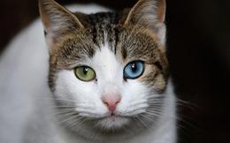 Lang thang khám phá 'thành phố...mèo' Istanbul