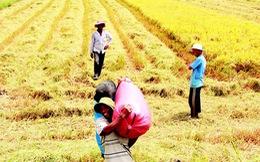Định vị thương hiệu gạo Việt