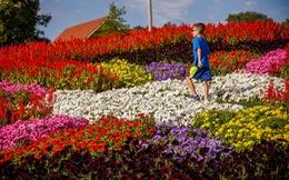 Thăm vườn nghệ thuật 'Quilt' độc đáo nhất ở Mỹ