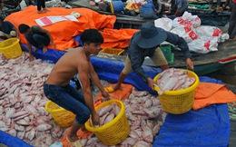 Hàng trăm tấn cá chết trắng bè, dân La Ngà khóc ròng