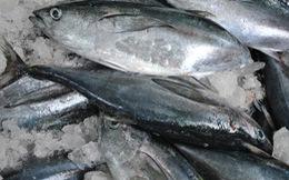 Một công nhân bị sốc phản vệ nặng khi ăn cá ngừ