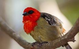 12 loài quý hiếm thoát số phận tuyệt chủng nhờ bảo tồn