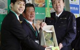Choáng với cặp dưa lưới hơn nửa tỉ đồng ở Nhật
