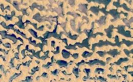 Ngỡ ngàng sa mạc biến thành 'hồ nước' sau bão