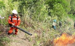 Nghệ An: Cháy rừng thông lây lan ở 3 huyện