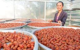 Kể chuyện cây trái miền Tây - Kỳ cuối: Làm gì để tăng giá trị trái cây Việt?
