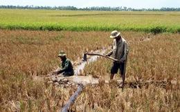Hỗ trợ 4 tỉ đồng cho 5 tỉnh công bố tình huống khẩn cấp về hạn mặn