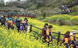 Tour charter đi Jeju Hàn Quốc