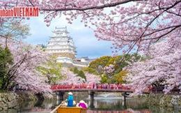 Tour Nhật Bản ngắm hoa anh đào