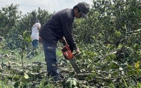 Đâu là nghịch lý cản đường phát triển của nông sản ĐBSCL?