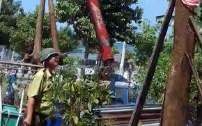 Cây giáng hương và cẩm lai trong vườn nhà bị kiểm lâm tịch thu?