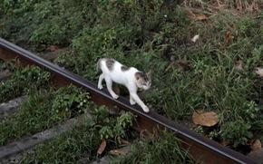 Bị bắt vì nghi 'buôn ma túy', chú mèo trốn khỏi nhà tù