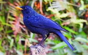Trên đỉnh núi thiêng Bạch Mã - Kỳ 5: Rừng chim đặc biệt