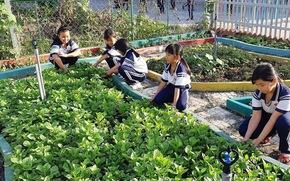 Vườn rau xanh mướt của học sinh tiểu học, phụ huynh nhìn thấy mua ngay