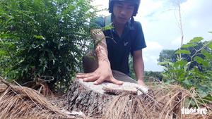 Xác định đối tượng liên quan đến vụ phá rừng đặc dụng ở Huế