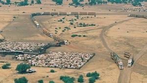Dân Trung Quốc ồ ạt mua đất nông nghiệp Úc