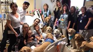 Vụ xả súng Ở Las Vegas: Những chú chó xoa dịu nỗi đau