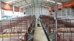 Ngăn chặn dịch bệnh gia súc, gia cầm phát sinh và lây lan