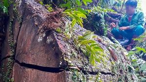 Tan nát rừng đầu nguồn - Kỳ 1: Tàn phá rừng phòng hộ