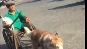 Video clip chú Husky kéo xe chở chủ ở Bình Dương gây tranh cãi