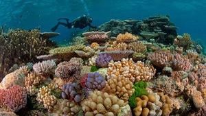 Videographic 50% san hô biến mất trong 30 năm đe doạ cuộc sống con người