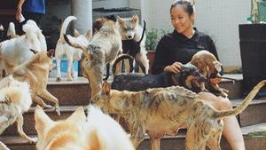 Cô gái 9X 'làm mẹ' của hơn 100 chó mèo hoang