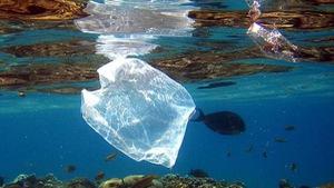 Hòn đảo Ý cấm dùng ly cốc nhựa
