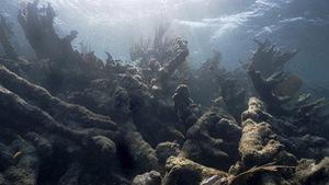 Cuộc 'thảm sát' san hô đại dương