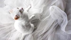 Ảnh cưới dễ thương chụp cùng mèo cưng