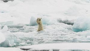 Ảnh thiên nhiên tuyệt đẹp thi National Geographic Photo
