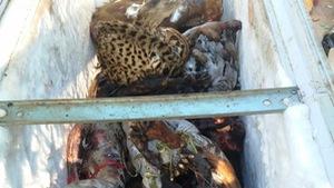 Bắt vụ buôn bán gần 500kg động vật hoang dã