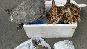 Tạm giữ lô động vật hoang dã đội lốt sản phẩm từ dừa