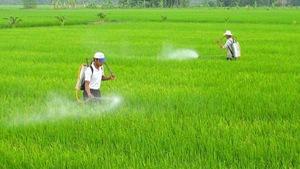 Ngăn chặn buôn bán và sử dụng thuốc bảo vệ thực vật nhập lậu