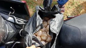 Khởi tố, bắt tạm giam người trộm 116 trứng vích ở Côn Đảo