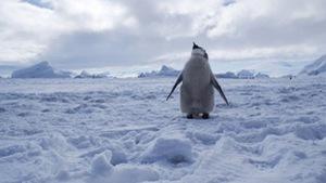 Thành lập khu bảo tồn biển lớn nhất thế giới ở Nam Cực