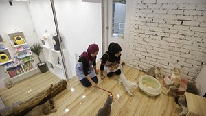 Khách sạn 5 sao cho mèo tại Malaysia