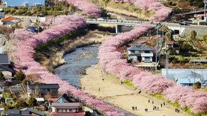 Ngắm hoa đào nhuộm hồng cả thị trấn Nhật