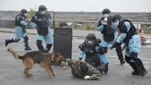 Nhật Bản thành lập cơ quan tình báo chống khủng bố