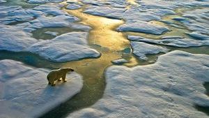 Hiểm họa biến đổi khí hậu đáng sợ hơn cả dịch bệnh và chiến tranh