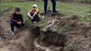 Phát hiện cặp ngà voi cổ 400.000 năm tại Siberia