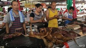 Trung Quốc: Khai mạc lễ hội thịt chó bất chấp tai tiếng