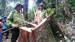 Vụ phá rừng pơmu: khởi tố nguyên đồn phó đồn biên phòng