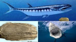 Quái vật biển giống cá mập trắng 'lạc' vào sa mạc Mỹ