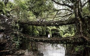 Đến Ấn Độ ngắm 'kiệt tác cầu từ rễ cây'