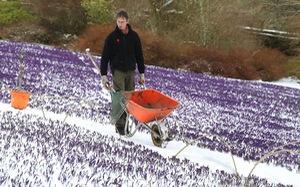 Tuyết rơi mùa xuân ở Anh