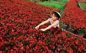 Làng hoa Sa Đéc ngày giáp tết