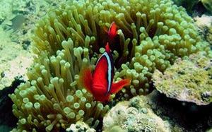 Lặn biển khám phá rạn san hô