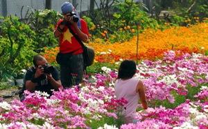 Hàng ngàn du khách ùn ùn đổ về làng hoa Sa Đéc